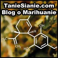 taniesianie, tanie sianie, marihuana, o marihuanie