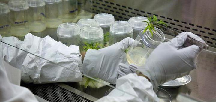 Woda w Kolorado może być skażona substancjami chemicznymi, które znajdują się w marihuanie, TanieSianie, Tanie Sianie