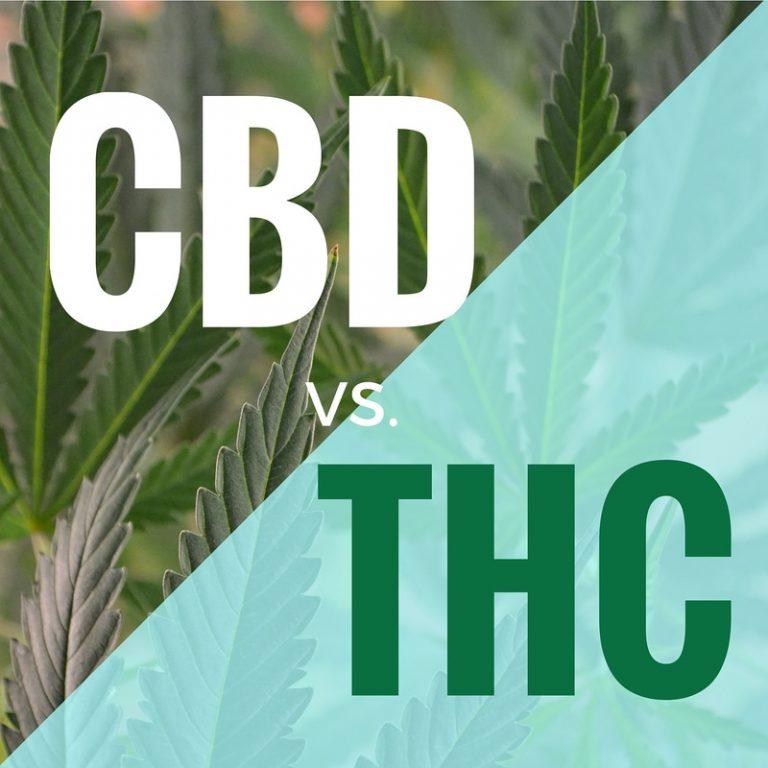 Różnice pomiędzy THC i CBD, TanieSianie, Tanie Sianie
