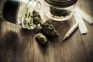 marihuana-zielona-marihuana-medycyna-cannabis