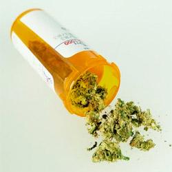 Mango zwiększa efekty marihuany, TanieSianie, Tanie Sianie