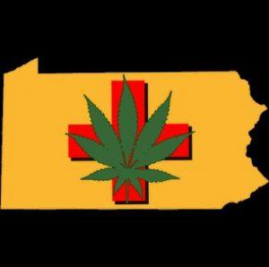 Aresztowano mężczyznę, który mówił że marihuana to sałata, TanieSianie, Tanie Sianie