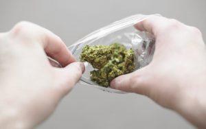 Własna uprawa marihuany, TanieSianie, Tanie Sianie