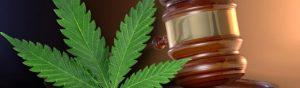 Potencjalny nowy dyrektor ONDCP przeciwnikiem marihuany, TanieSianie, Tanie Sianie