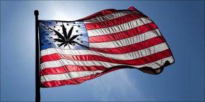 Rekordowa liczba Amerykanów próbowała cannabis, TanieSianie, Tanie Sianie