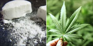Leczenie uzależnionych od opioidów za pomocą marihuany, TanieSianie, Tanie Sianie