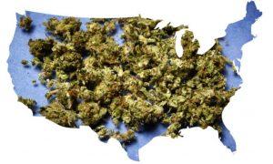 Legalna marihuana w Illinois, TanieSianie, Tanie Sianie