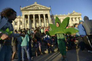 Wpływ marihuany na zdrowie publiczne, TanieSianie, Tanie Sianie