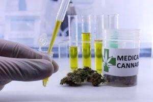 Sprzedaż marihuany nie prowadzi do zwiększonej ilości pacjentów, TanieSianie, Tanie Sianie