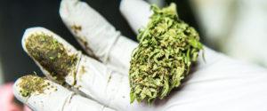 Urzędnicy w Pensylwanii popierają medyczną marihuanę, TanieSianie, Tanie Sianie