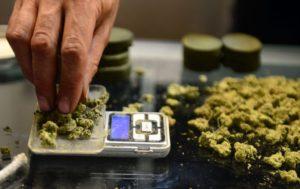 Nalewki z cannabis, TanieSianie, Tanie Sianie