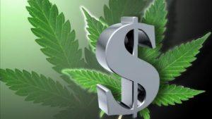 Wyniki sprzedaży marihuany w Kolorado, TanieSianie, Tanie Sianie