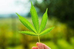 Estrogen i marihuana, TanieSianie, Tanie Sianie