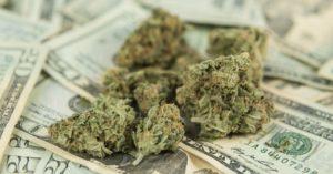 Czy naprawdę można mrozić cannabis?, TanieSianie, Tanie Sianie