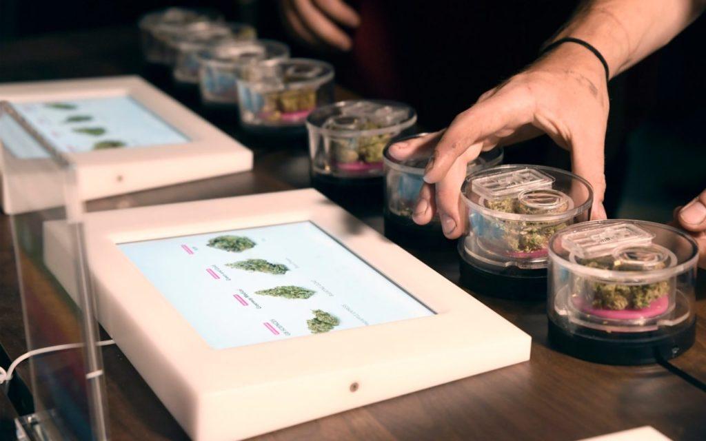 Sposoby na automatyzację uprawy cannabis, TanieSianie, Tanie Sianie