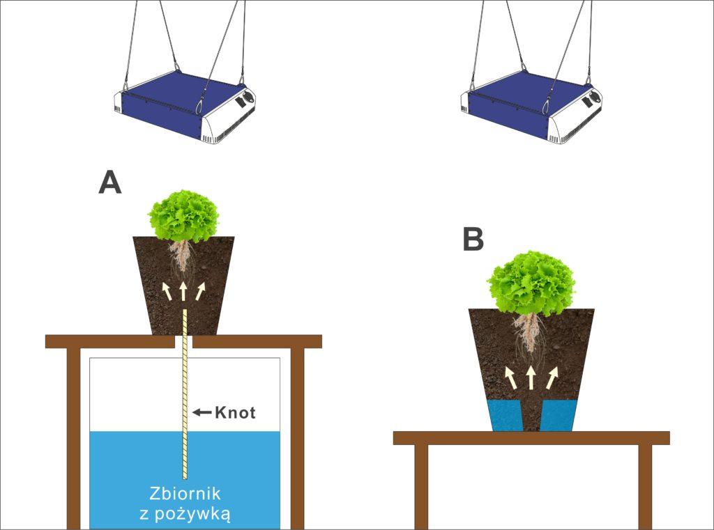 Knotowe systemy hydroponiczne, TanieSianie, Tanie Sianie