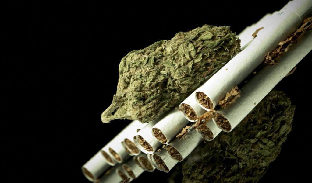 Ochrona marihuany przed wiatrem, TanieSianie, Tanie Sianie
