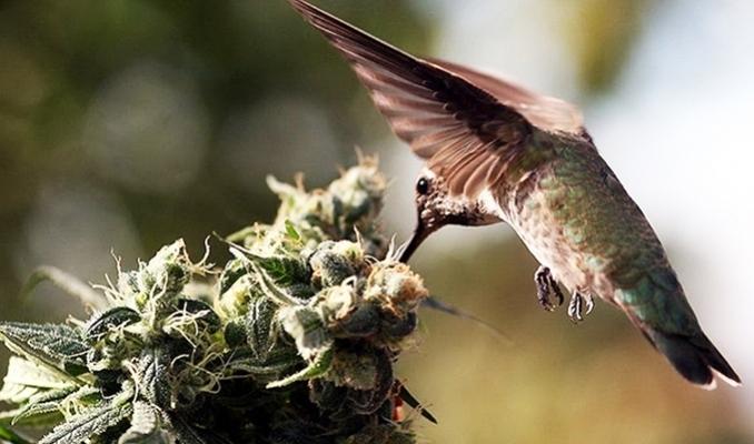 Ptaki w uprawie outdoor, TanieSianie, Tanie Sianie