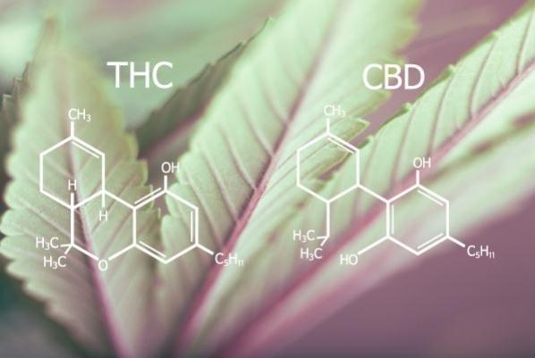 Dlaczego THC jest psychoaktywne, a CBD nie?, TanieSianie, Tanie Sianie
