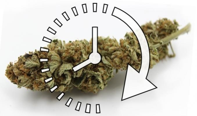 Jak szybko wysuszyć marihuanę, TanieSianie, Tanie Sianie