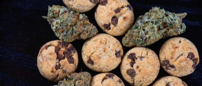 Mikrodozowanie marihuany: osiągaj efekty bez odczuwania haju, TanieSianie, Tanie Sianie