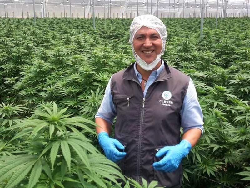 Ustawa legalizująca cannabis w Australii, TanieSianie, Tanie Sianie