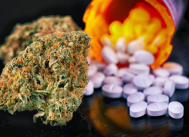 Weterani napotykają trudności w dostępie do marihuany, TanieSianie, Tanie Sianie