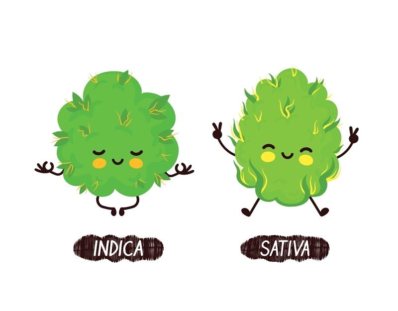 Różnica Między Odmianami Sativa i Indica, TanieSianie, Tanie Sianie