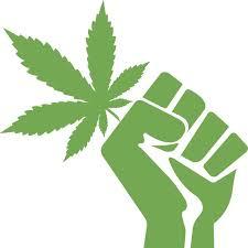Zwalczanie nudności za pomocą marihuany, TanieSianie, Tanie Sianie