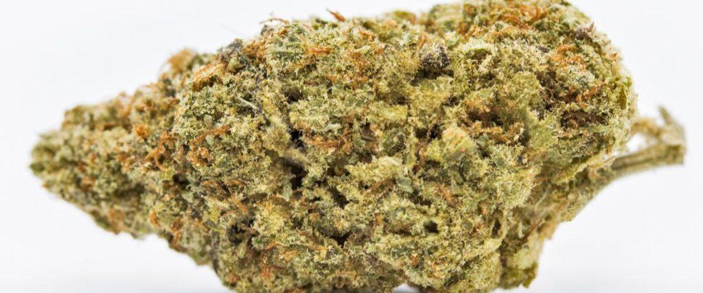 Czy Marihuana Może Pomóc w Leczeniu Migren?, TanieSianie, Tanie Sianie