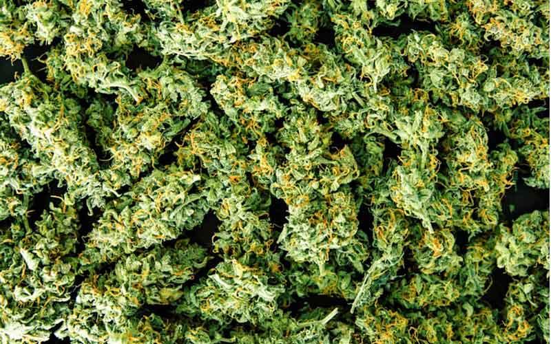 Konopie czy Marihuana? Skaner THC Powie Ci w Kilka Sekund, TanieSianie, Tanie Sianie