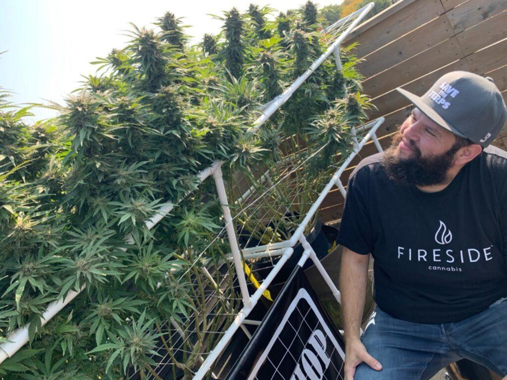 Marihuana Zbliża, a Nie Dzieli, TanieSianie, Tanie Sianie