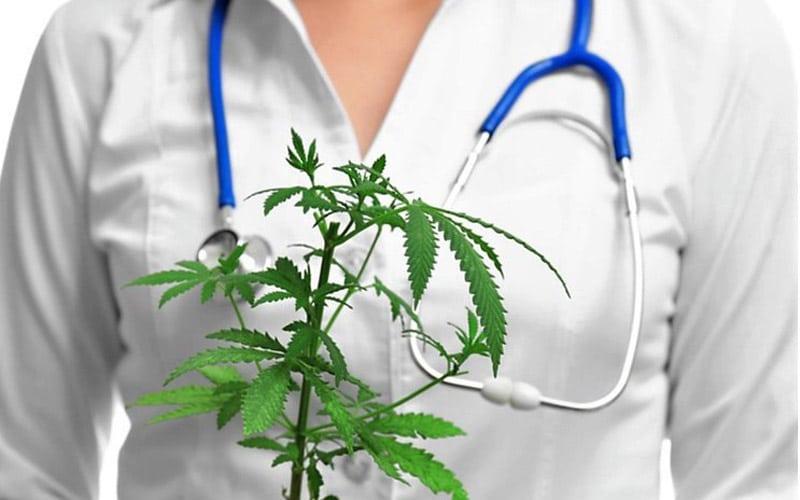 Marihuana Nie Zwiększa Ryzyka Chorób Sercowo Naczyniowych, TanieSianie, Tanie Sianie